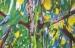 Sous-bois n°1 - huile sur toile - 200 x 130 cm - 2014