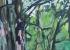 Gouache sur papier - 59 x 42 cm - 2015
