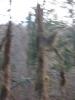 Forêt magique - 2016
